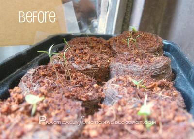 DIY sun reflectors to keep plants strong