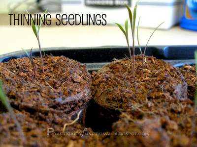 {How to} Thinning seedlings