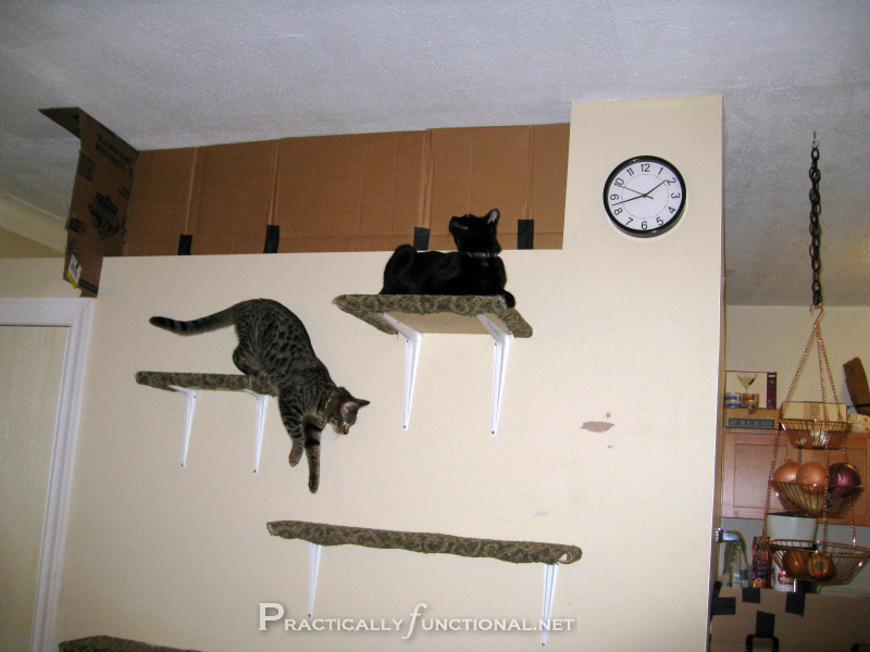 How To Make Your Own Cat Shelves