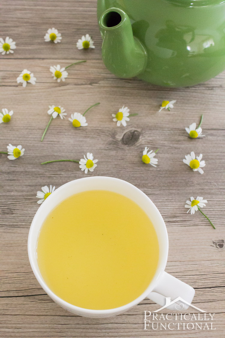 Learn how to brew the perfect cup of chamomile tea! Plus tips on how and when to harvest chamomile from your garden!