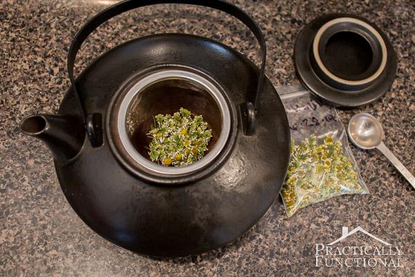 How To Harvest Chamomile & Chamomile Tea Recipe-6