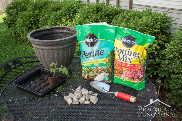 How to transplant tomato seedlings into larger containers-2