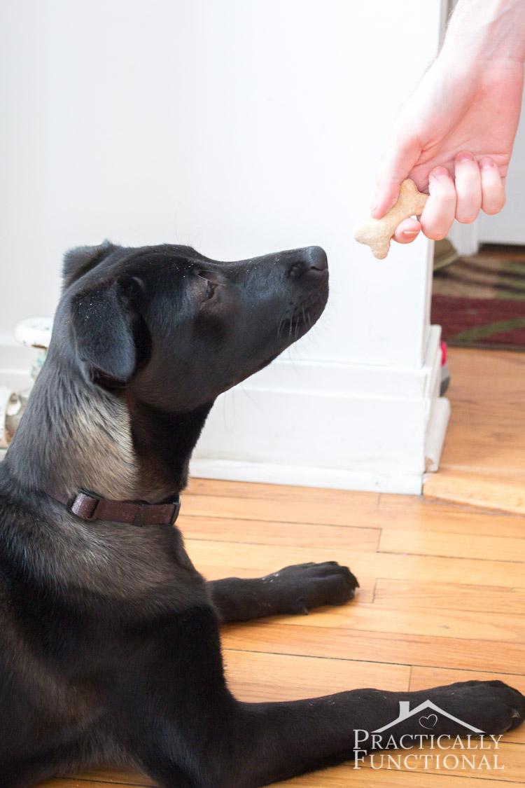 Make your own homemade dog biscuit treats with just a few ingredients you already have in your pantry!