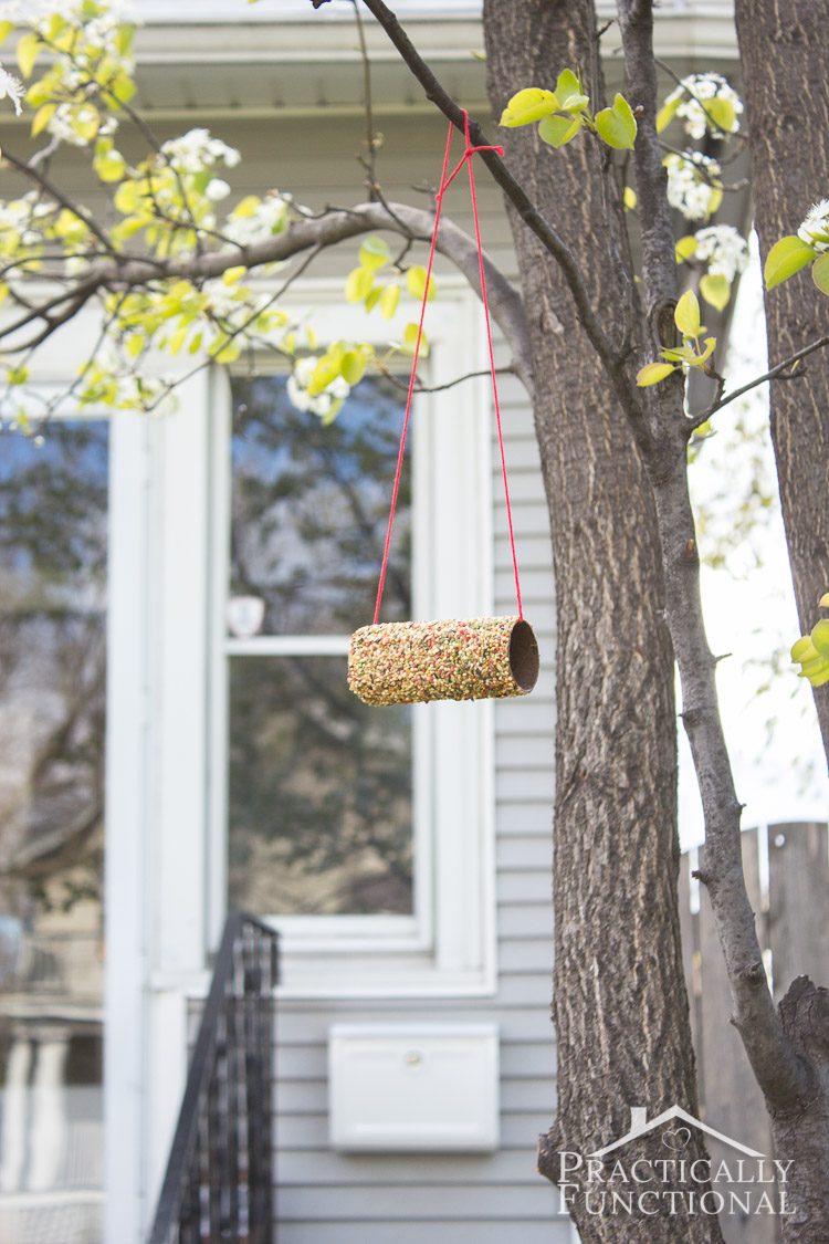 Turn a toilet paper roll into a bird feeder! All you need is peanut butter, bird seed, and a cardboard tube; great kids craft!