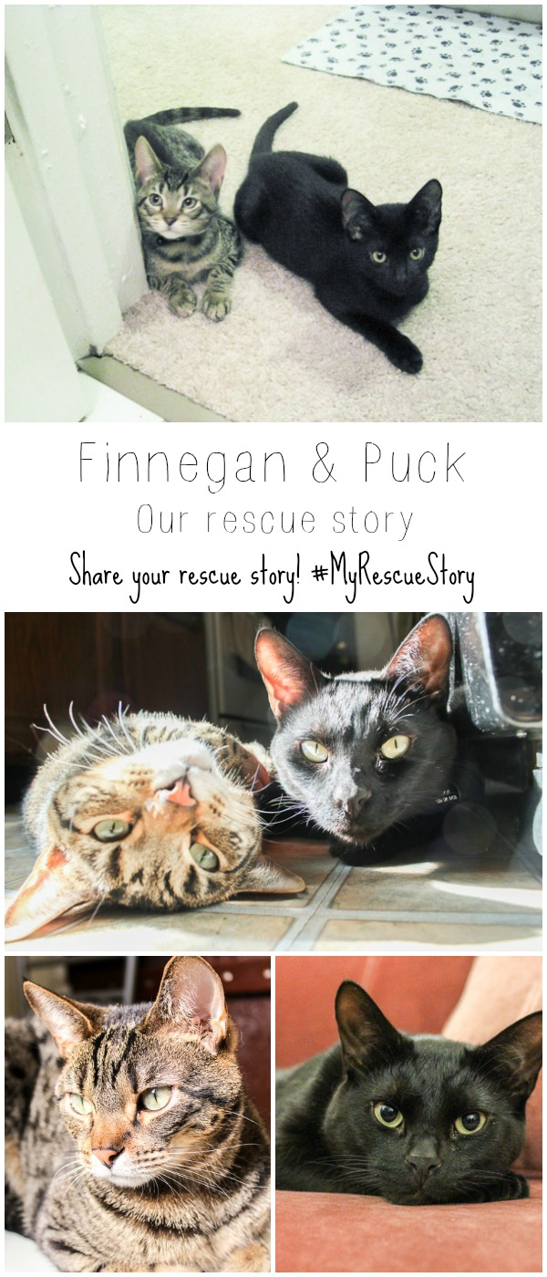 Finnegan and Puck's rescue story, what's your rescue story?!