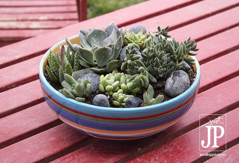 Turn a thrift store find into a cute succulent garden - and 11 other festive DIY spring projects!