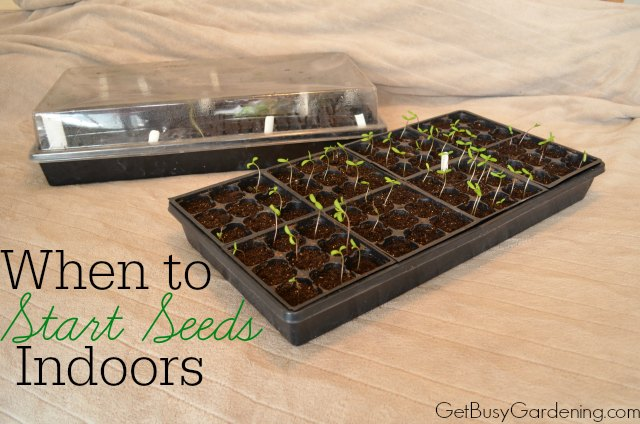 When to start seeds indoors - and 11 other festive DIY spring projects!