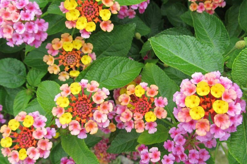 34 plants that repel mosquitos naturally