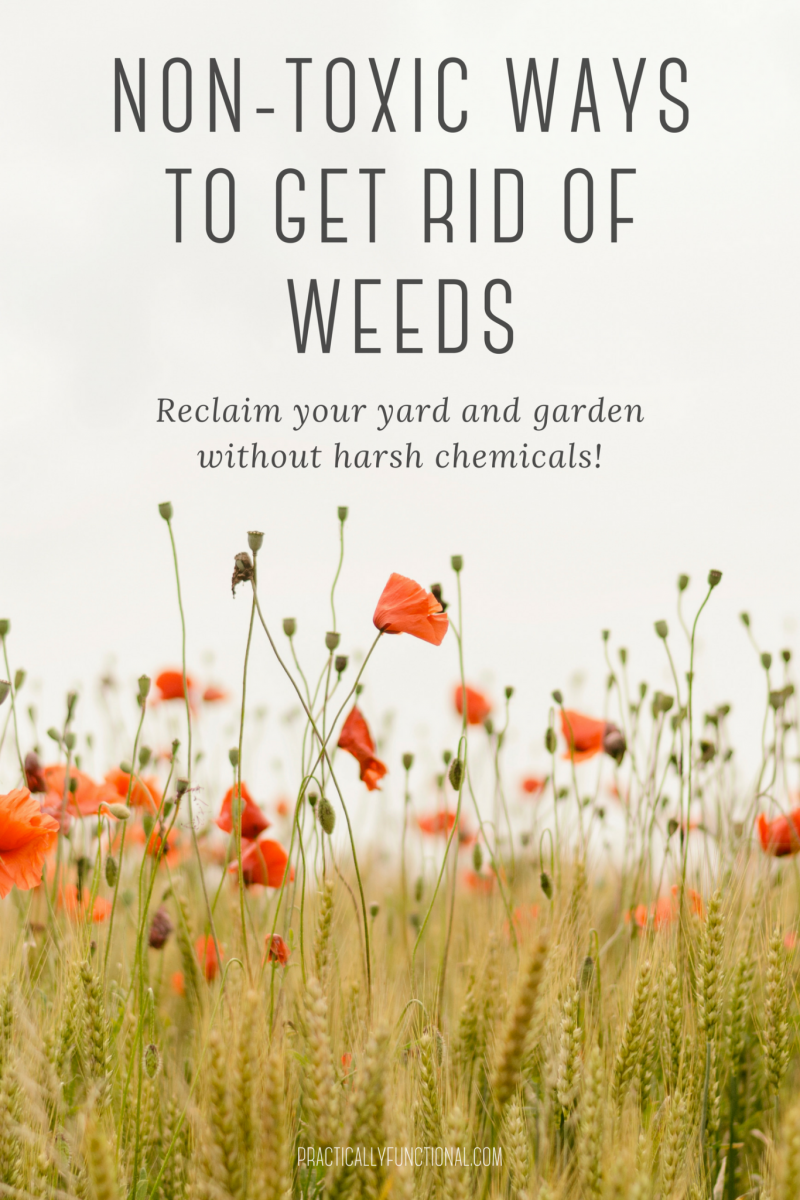 11 Non Toxic Ways To Get Rid Of Weeds